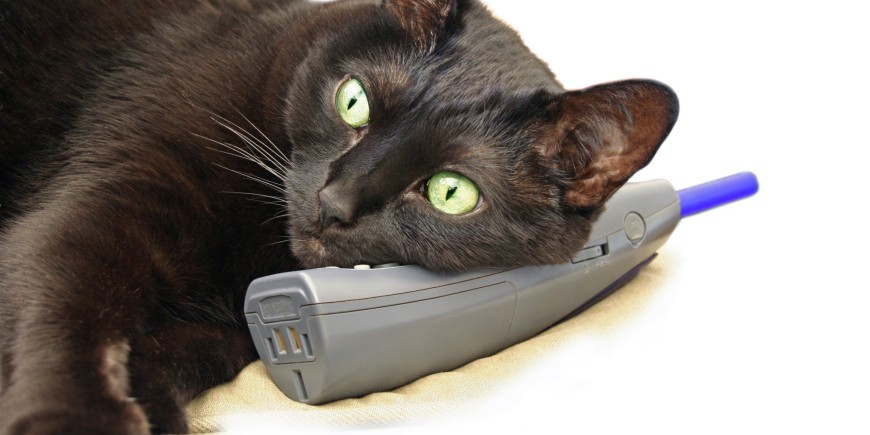 Cat On Phone.jpg