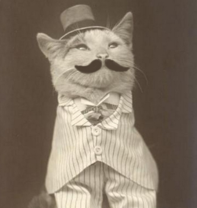 Good Manners Gentleman Cat