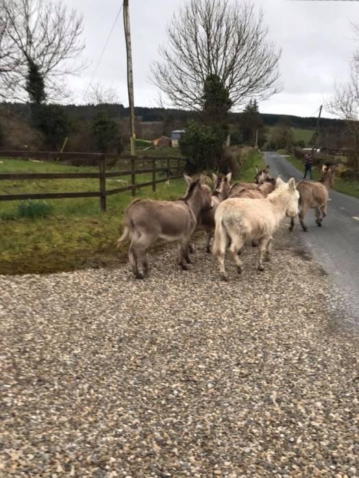 donkeys2